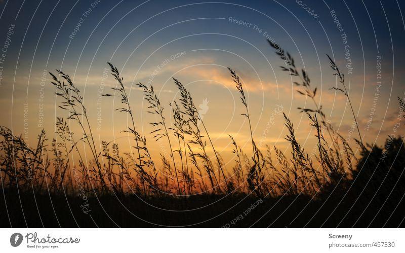 Sky Nature Plant Beautiful Summer Landscape Calm Clouds Meadow Grass Bushes Warm-heartedness Romance Serene Flexible Sunset