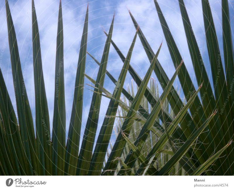 palm leaves Palm tree Leaf Vacation & Travel South Sun