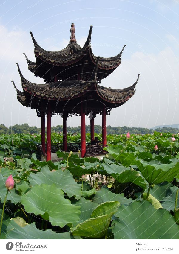 Nature Calm Success Idyll Asia China Water lily Harmonious Lotus Pavilion