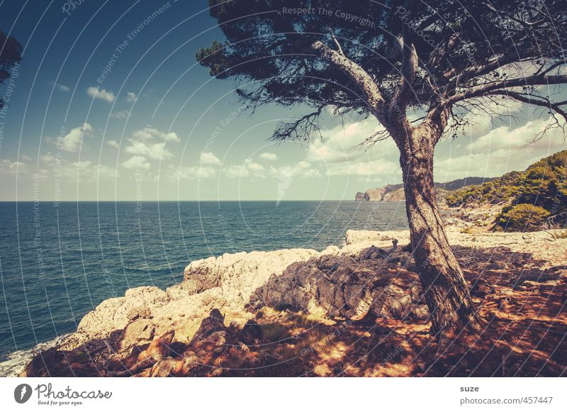 Sky Nature Vacation & Travel Summer Tree Ocean Loneliness Landscape Beach Environment Mountain Coast Leisure and hobbies Earth Idyll Vantage point