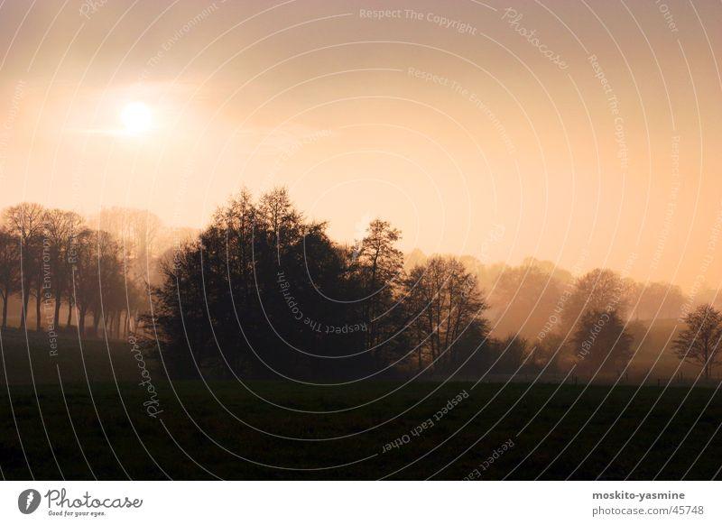 Dreamy landscape Back-light Tree Fog Evening Romance Loneliness Horizon Sun Sky Unclear Earth