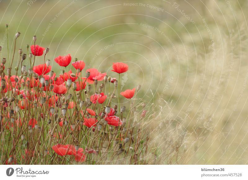 Nature Beautiful Green Plant Red Flower Environment Autumn Movement Grass Blossom Natural Field Illuminate Blossoming Romance