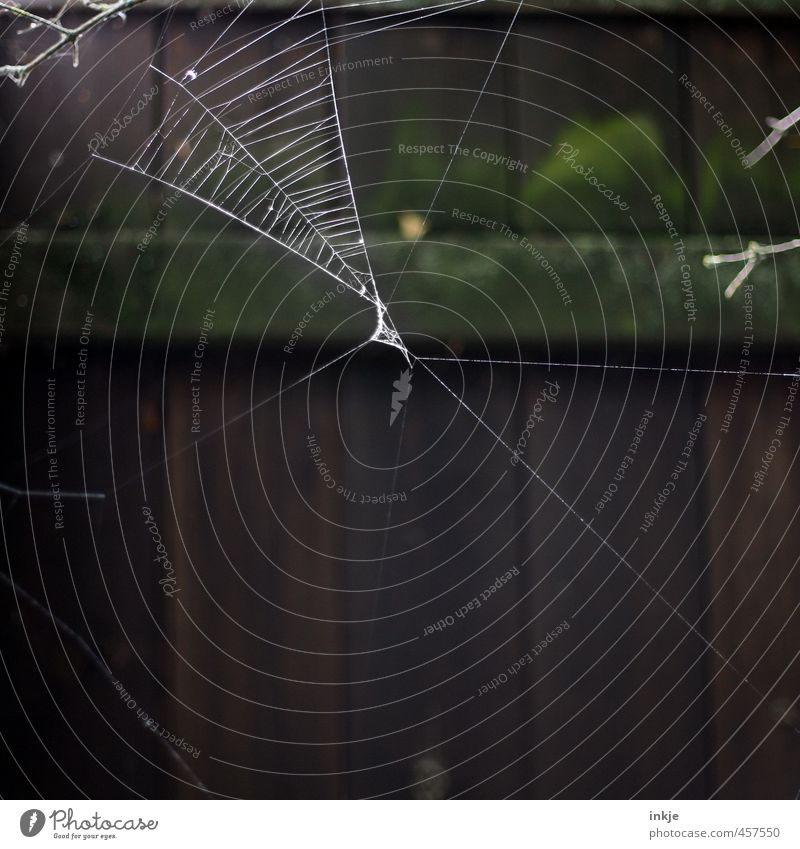 9:52 a.m. Garden Deserted Fence Spider's web Cobwebby Net Network Hang Dark Thin Disgust Broken Natural Diligent Endurance Unwavering Beginning Effort Precision