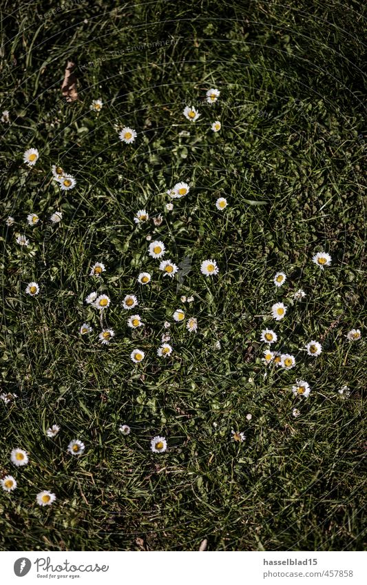 daisies Lifestyle Luxury Joy Happy Beautiful Healthy Healthy Eating Athletic Fitness Wellness Harmonious Well-being Contentment Senses Relaxation Calm