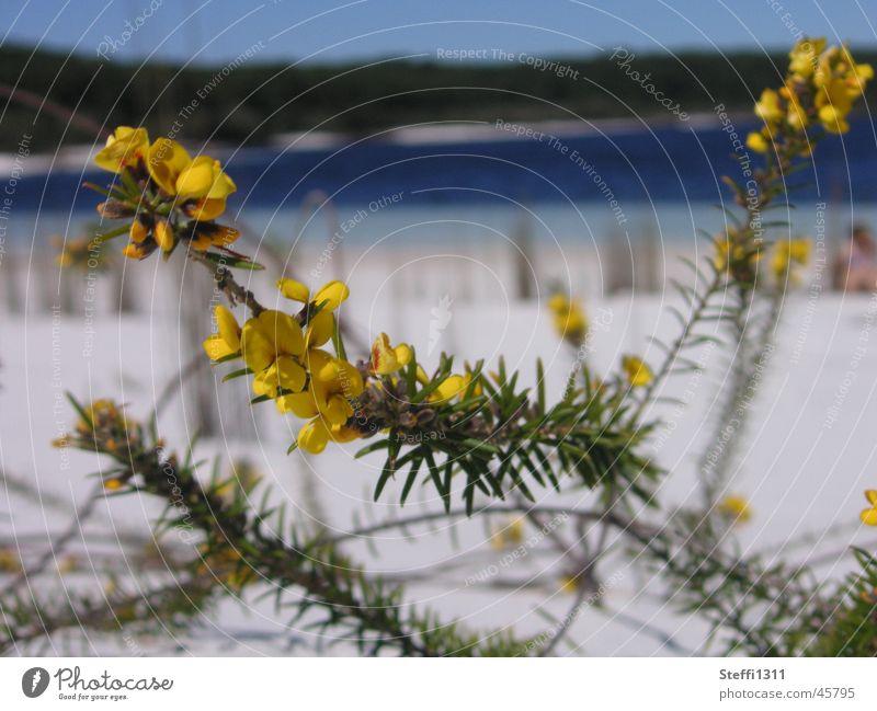 Nature Flower Beach Vacation & Travel Lake Sand Australia