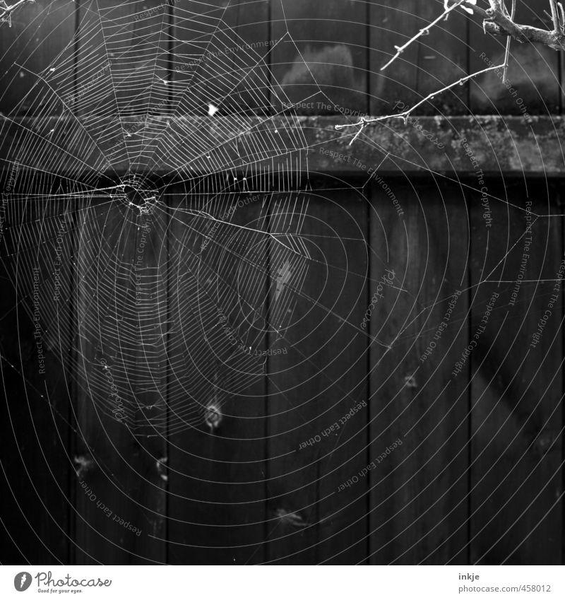 Nature Dark Wait Round Network Thin Net Fence Hang Trap Effort Disgust Endurance Spider's web Diligent Unwavering