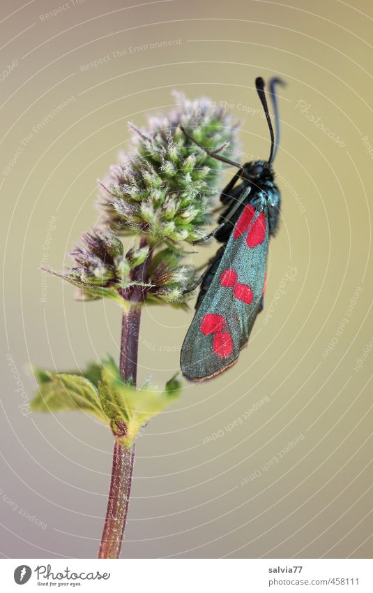 Nature Plant Summer Red Animal Black Environment Blossom Garden Pink Field Sit Wild animal Insect Butterfly Feeler