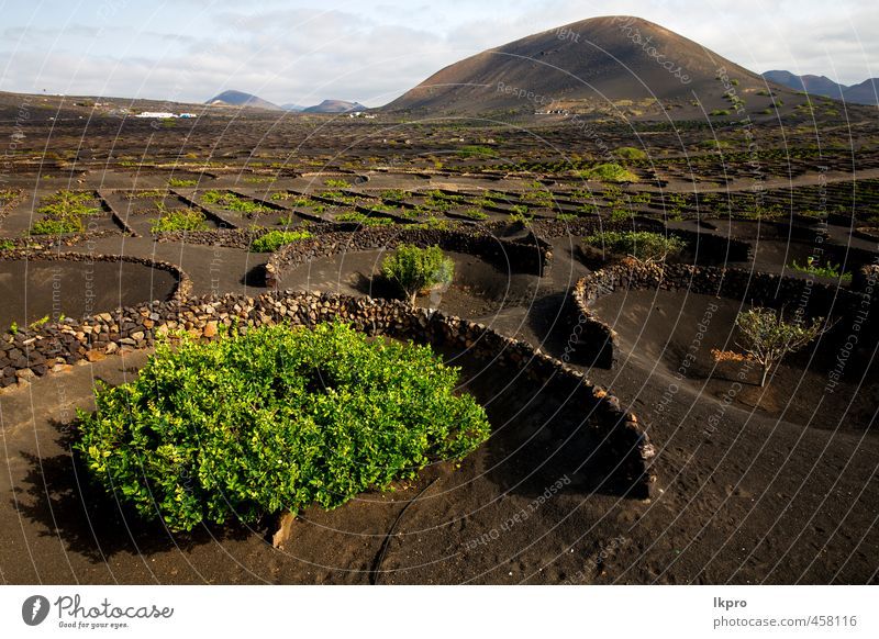 grapes wall crops cultivation Vacation & Travel Tourism Trip Waves Mountain Work and employment Nature Landscape Plant Sand Sky Wind Hill Rock Terrace Street