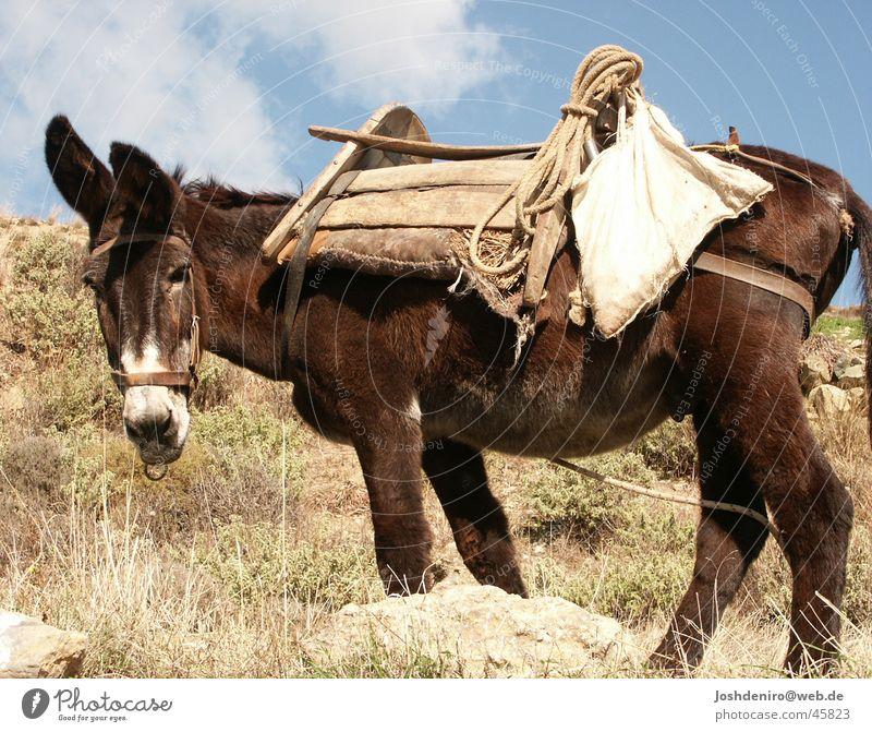 Nature Animal Transport Agriculture Farmer Donkey Greece Crete