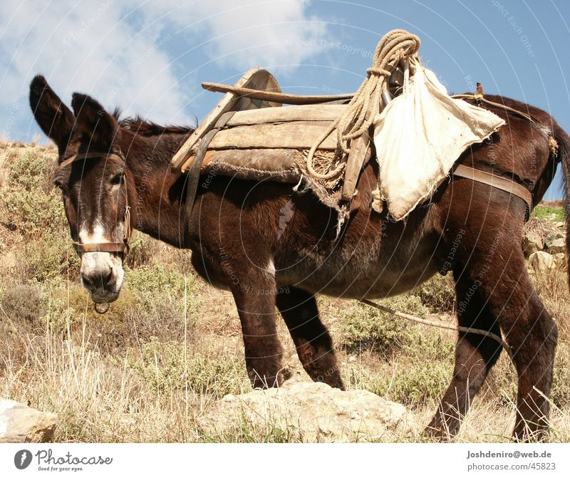 Nature Animal Transport Agriculture Farmer Donkey Greece Crete