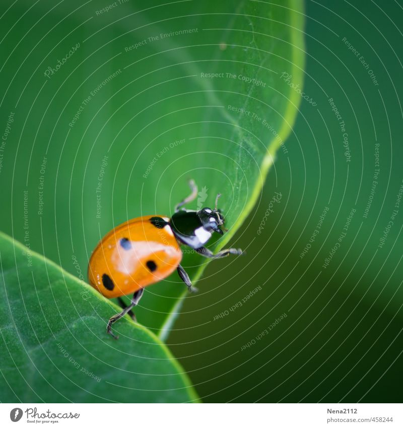 Nature Green Plant Red Animal Leaf Forest Environment Garden Line Air Park Beautiful weather Climbing Insect Edge