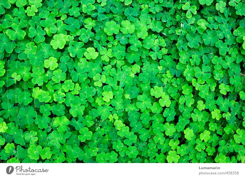 Good luck. Environment Plant Foliage plant Clover Cloverleaf Four-leafed clover Growth Friendliness Happiness Fresh Beautiful Small Many Green Emotions Happy