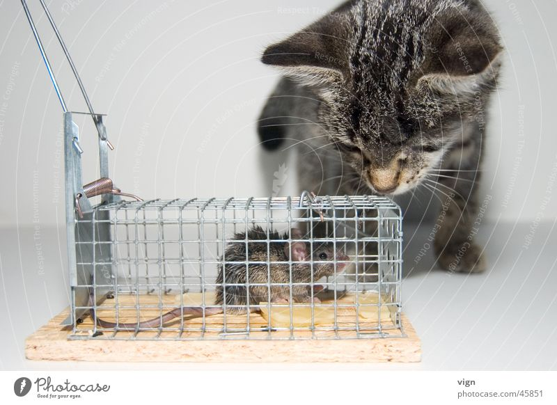 eye contact Cat Looking Cage Captured Far-off places Mouse Appetite Fear