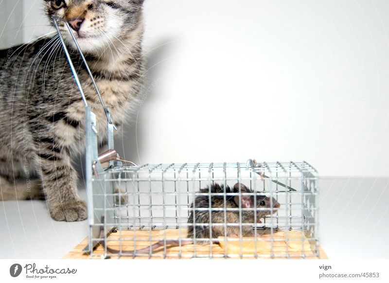 Cat Appetite Boredom Captured Mouse Full Cage Disinterest