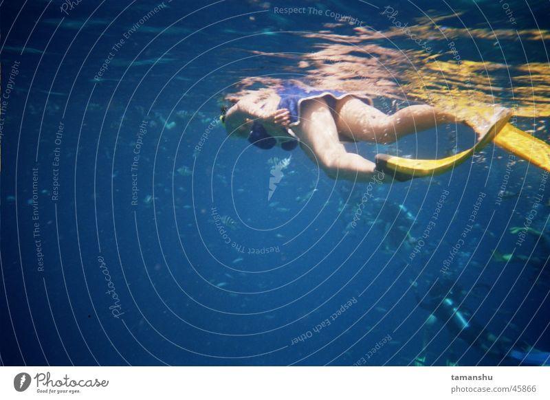 Water Ocean Fish Dive Diver