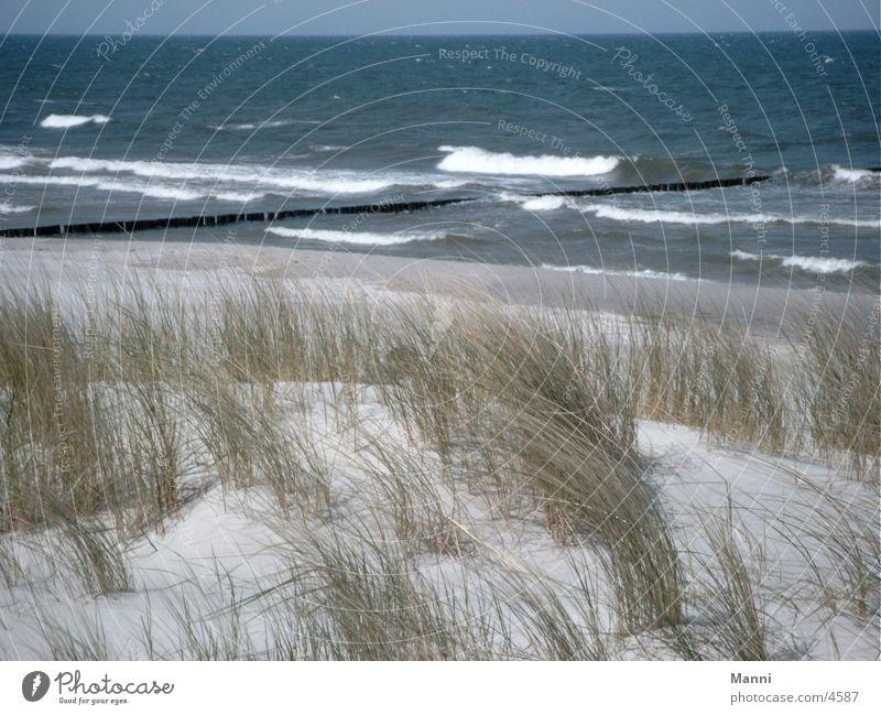 ocean Ocean Beach dune