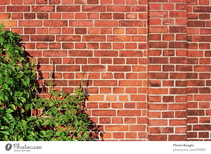 Bricks 4-4 Wall (barrier) Wall (building) Background picture Stone wallpapers bricks red brick red-brick Brick wall