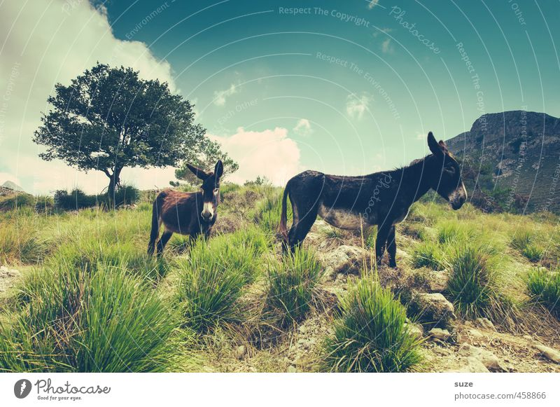 One of them is a donkey ... Vacation & Travel Summer Sun Mountain Environment Nature Landscape Animal Elements Earth Sky Tree Meadow Farm animal 2 Fantastic