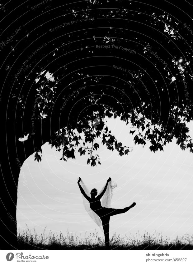 shadow play Fitness Sports Training Yoga Dance Pilates Gymnastics Ballet Feminine 1 Human being 18 - 30 years Youth (Young adults) Adults Dancer Tree Leaf Grass