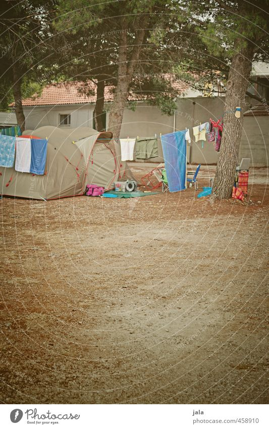 camping Vacation & Travel Freedom Camping Summer vacation Plant Tree Tent camp Wild Joy Colour photo Exterior shot Deserted Copy Space bottom Copy Space middle