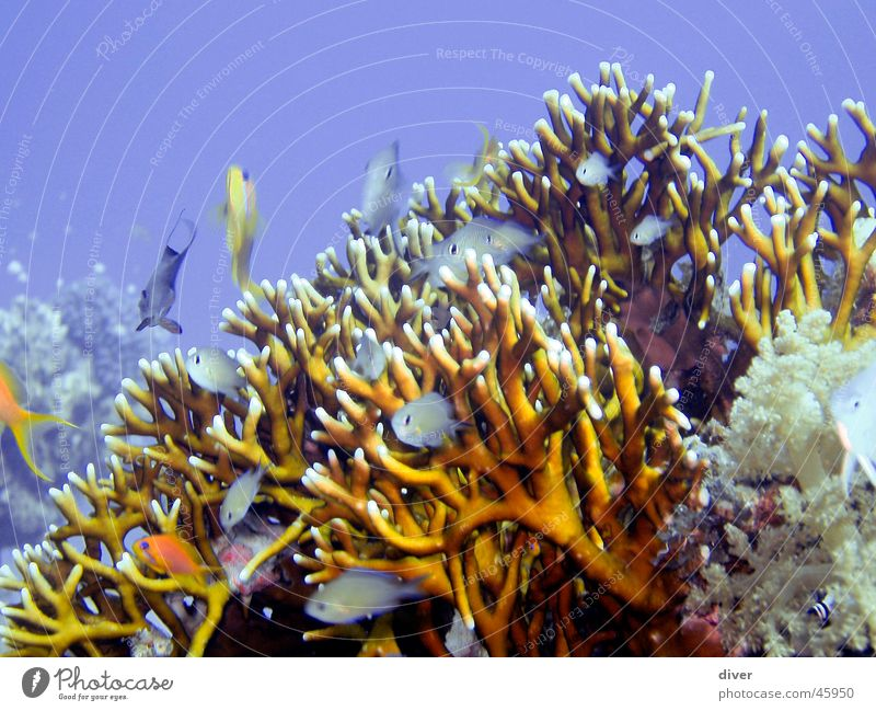 sealife Ocean Water Fish Experience Coral Colour photo Underwater photo