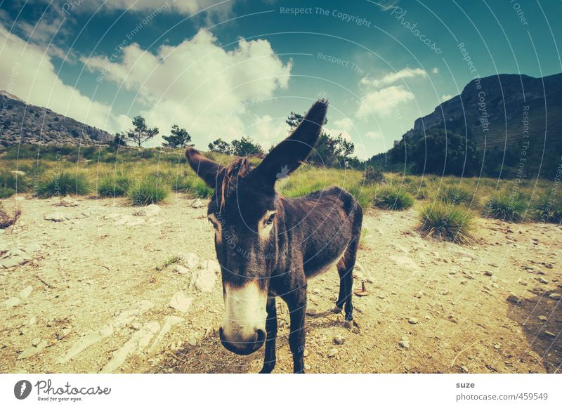 Sky Nature Vacation & Travel Summer Landscape Animal Environment Mountain Meadow Travel photography Earth Gloomy Elements Cute Dry Spain