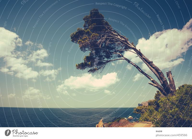 Sky Nature Vacation & Travel Beautiful Summer Tree Ocean Landscape Clouds Environment Lanes & trails Coast Horizon Leisure and hobbies Wind Tourism