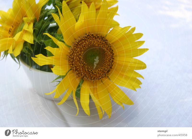 Summer Yellow Sunflower
