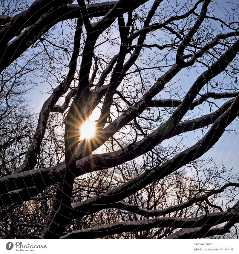 Good prospects. Environment Nature Sky Sun Sunlight Winter Beautiful weather Tree Forest Esthetic Natural Blue Black White Emotions Joie de vivre (Vitality)