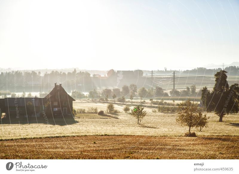 golden hour of the morning Environment Nature Landscape Plant Tree Meadow Field Natural Yellow Gold Agriculture Colour photo Exterior shot Deserted Morning