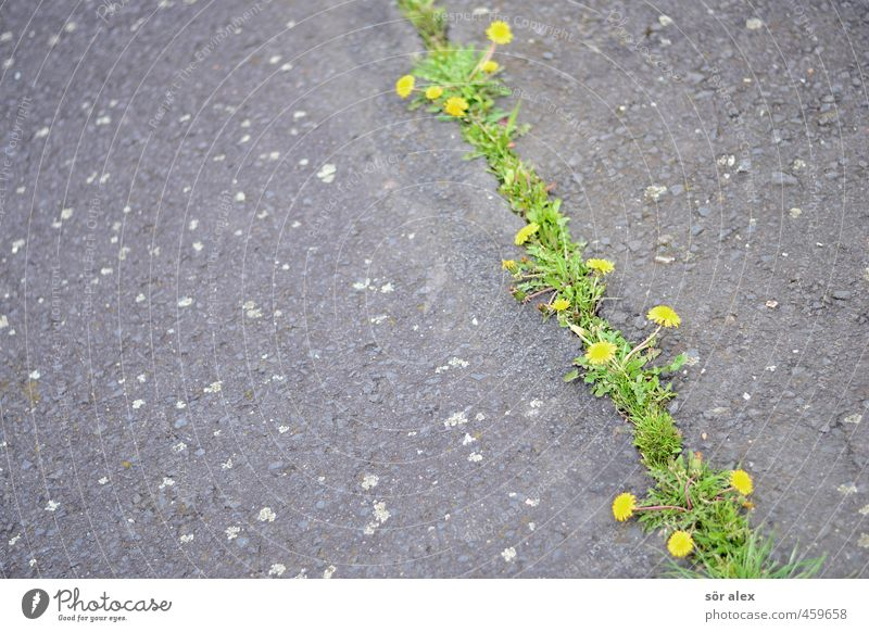 Nature City Plant Flower Environment Life Grass Gray Blossom Natural Power Growth Places Broken Transience Change