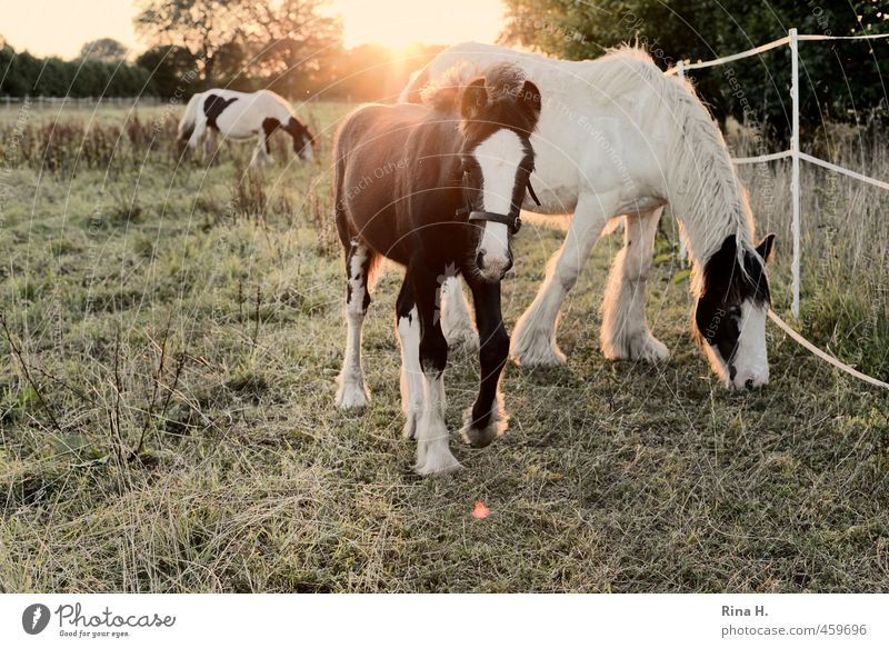 Summer Animal Baby animal Meadow Autumn Grass Idyll Cute Curiosity Horse Pasture Fence Pet To feed Animal family Foal