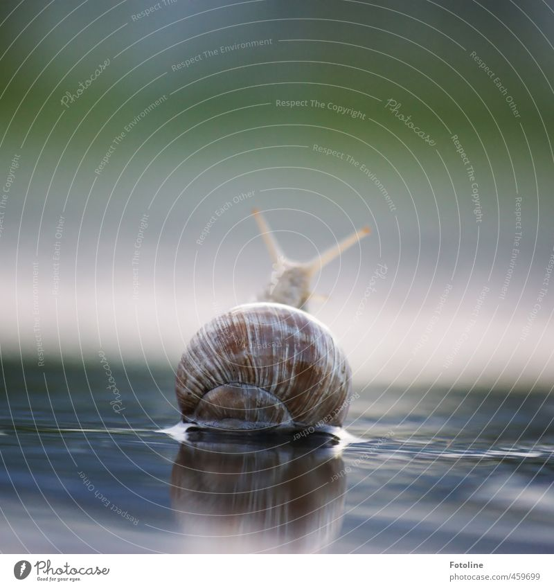 Nature Water Summer Animal Environment Small Natural Bright Wild animal Free Wet Elements Near Snail Crawl Slowly