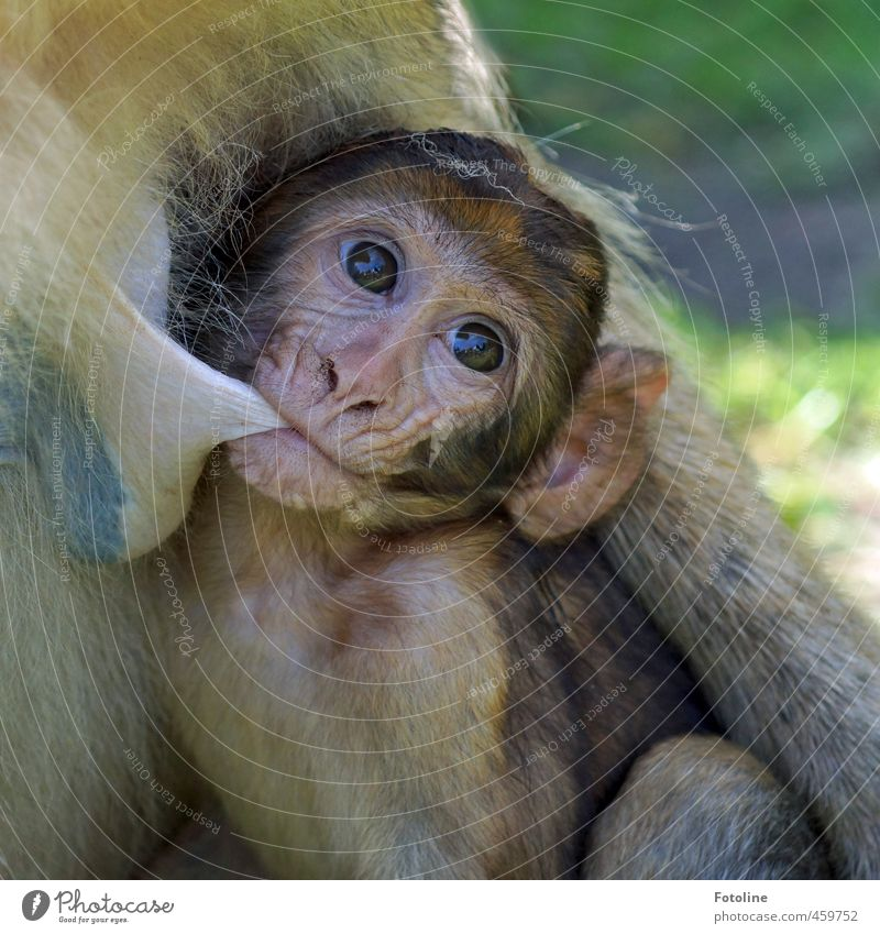 Nature Animal Baby animal Environment Natural Small Free Wild animal Near Pelt Animal face Monkeys Suck Animal family