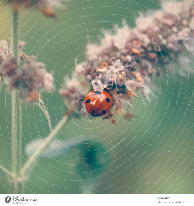 Pearl of nature Environment Nature Animal Plant Flower Grass Wild plant Beetle 1 Sign Esthetic Cute Soft Green Red Happy Idyll Uniqueness Ladybird 4 Smooth