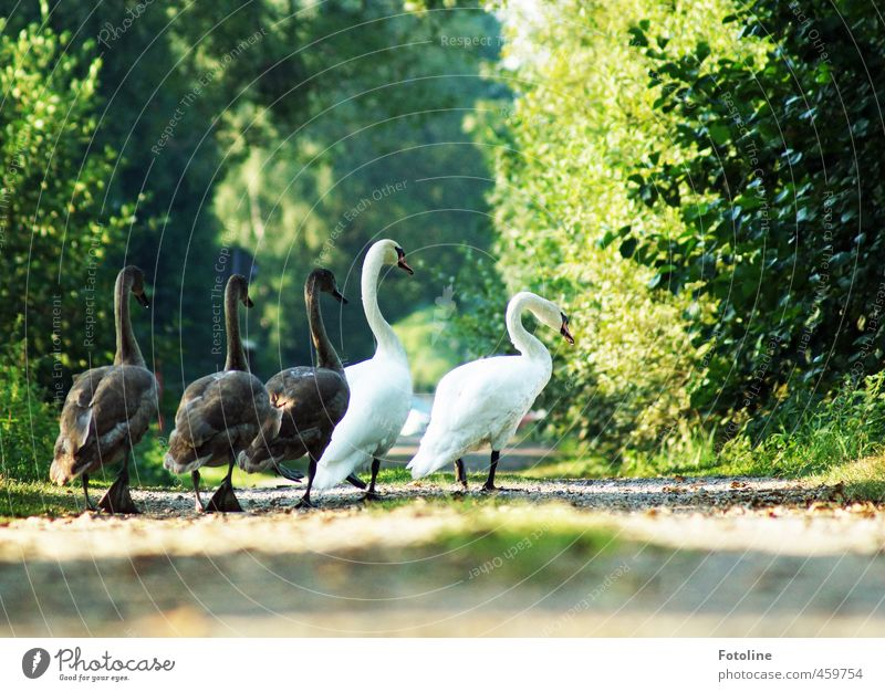family trip Environment Nature Plant Animal Elements Earth Sand Summer Tree Bushes Park Forest Wild animal Swan Animal family Natural Colour photo Multicoloured