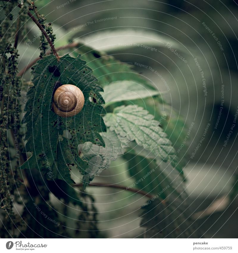 haven of peace Nature Plant Wild plant Forest Snail 1 Animal Sign Dark Wet Round Soft Resting point Snail shell Stinging nettle center National security