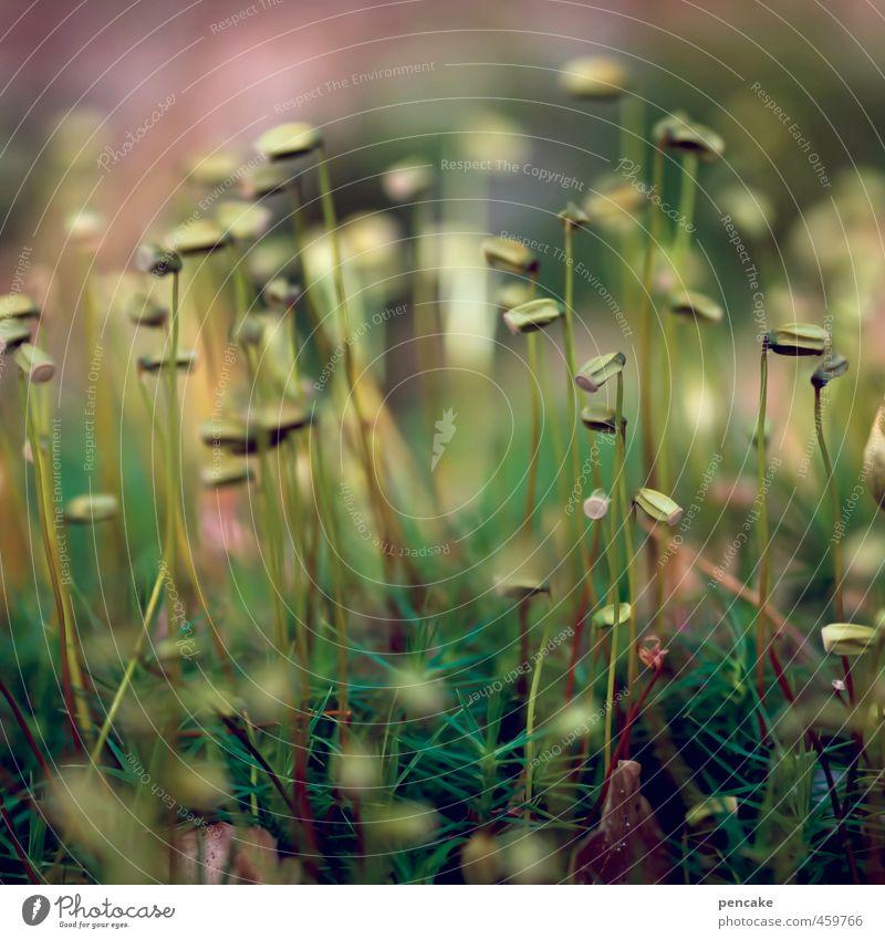 mosaic Nature Plant Elements Earth Autumn Grass Moss Forest Happiness Contentment Joie de vivre (Vitality) Warm-heartedness Soft Warm colour Photomicrograph