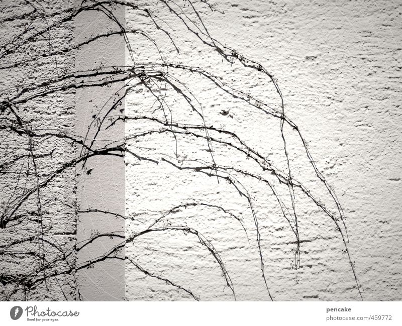 deciduous lot Wall (barrier) Wall (building) Facade Sign Thin Cold Gloomy Dry Detached End Beginning Tendril Defoliated Sparse Death Subdued colour