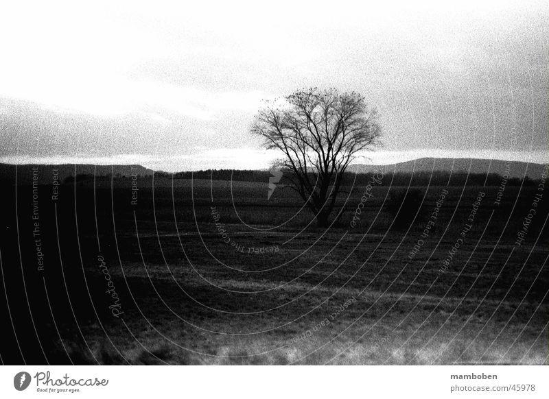 Analogue Tree Meadow Nature Black & white photo