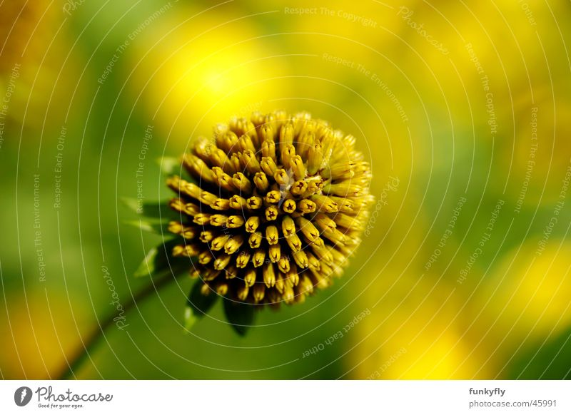 Nature Yellow Background picture Single