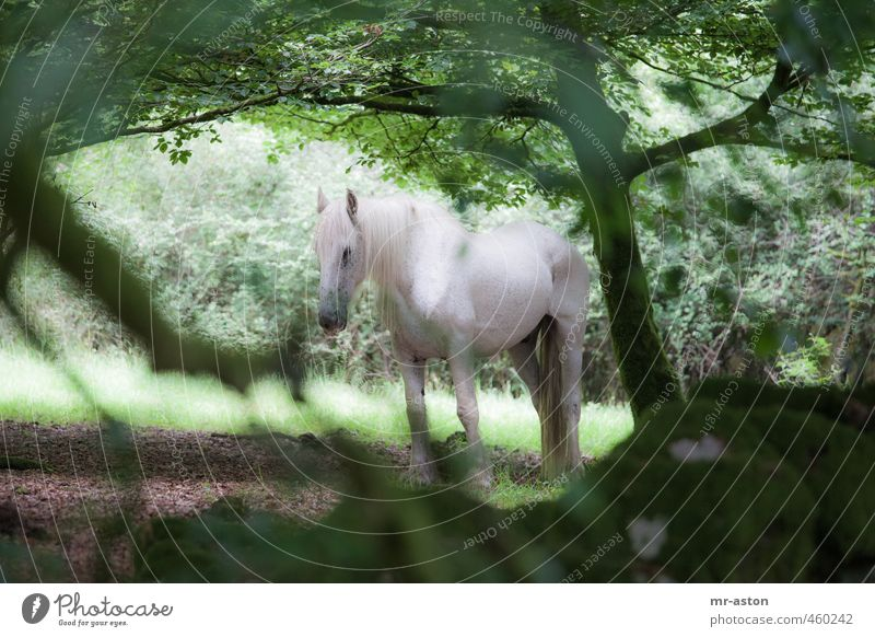 monitored Forest Animal Wild animal Horse 1 Esthetic Green White Colour photo Exterior shot Deserted Day Contrast Animal portrait Forward