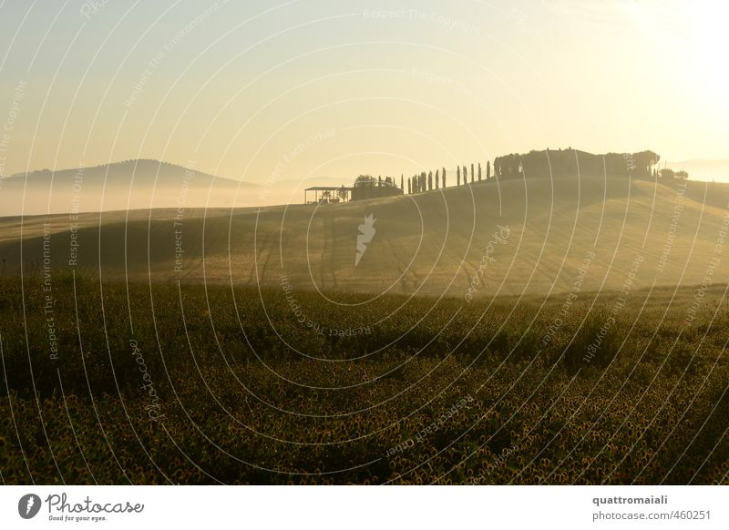 June morning in Val D'Orcia Vacation & Travel Tourism Summer Nature Landscape Sunrise Sunset Beautiful weather Fog Field Hill Tuscany San Quirico d'Orcia Italy