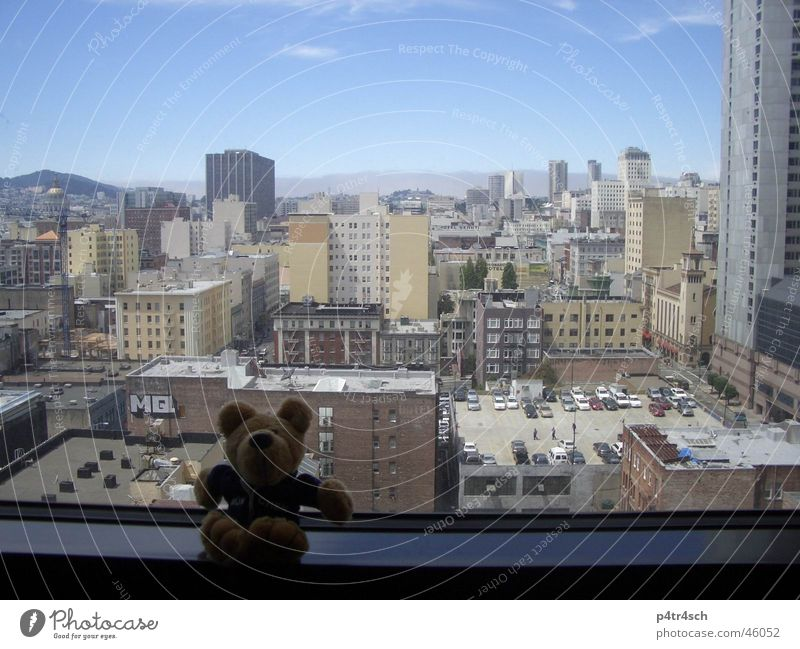 Bear on journeys Cuddly toy Window Vantage point High-rise San Francisco Sky Town view from the renaissance hotel skyskraper blue