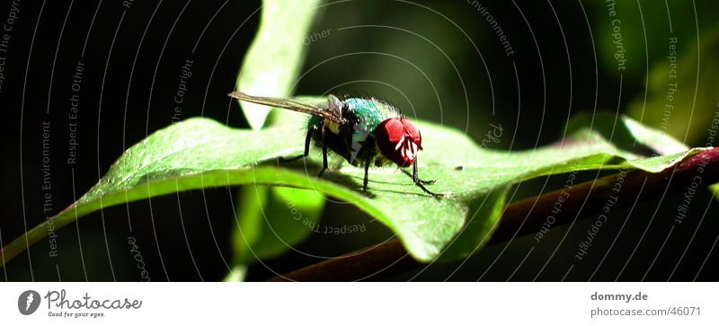 Nature Green Red Leaf Black Eyes Animal Sit Fly Flying Wing Macro (Extreme close-up)