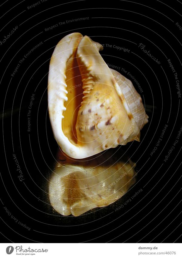Nature Ocean Black Corner Round Mirror Mussel Prongs Hissing