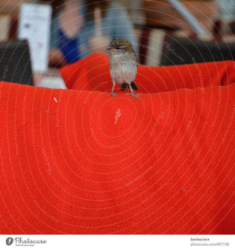 Animal   Red carpet for the sparrow Menu Vacation & Travel Summer Restaurant Feminine 1 Human being Bird Sparrow Blanket Sit Brash Small Curiosity Joy