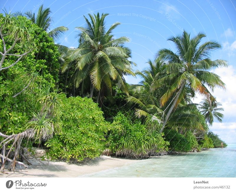 Vilamendhoo Beach Palm tree Maldives Island