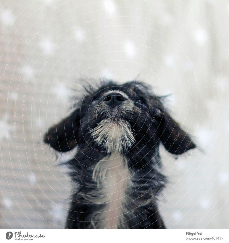I wish for ... Pet Dog 1 Animal Observe Stars Pattern Upward Puppy Dream Snout Ear Pelt Think Christmas & Advent Desire Heaven Sky Colour photo Subdued colour