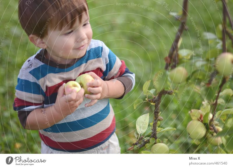 Human being Child Nature Tree Autumn Playing Boy (child) Healthy Garden Food Fruit Smiling Fresh Nutrition Cute Sweet
